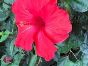Blüte im tropenhaus